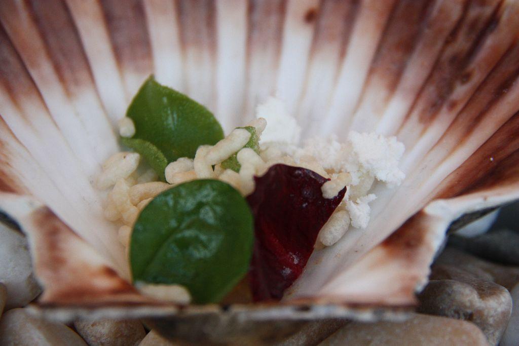 Jakobsmuschel – Salate – Haselnussöl - Puffreis