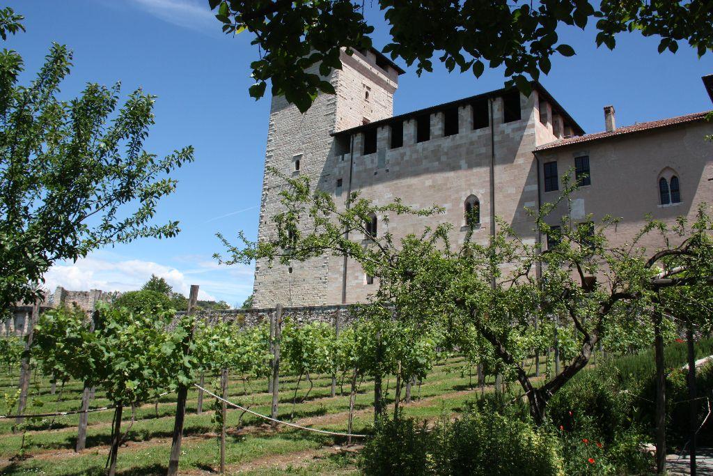 Weinstöcke - Rocca Boromeo