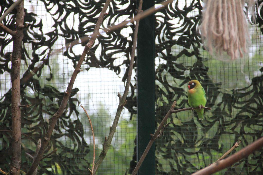 Papagei - Schöner Blog(t)