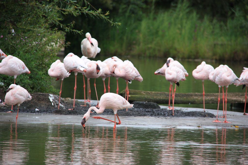 Flamingo - Schöner Blog(t)