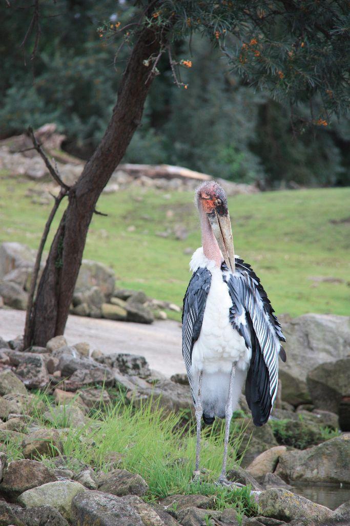 Vogel - Schöner Blog(t)