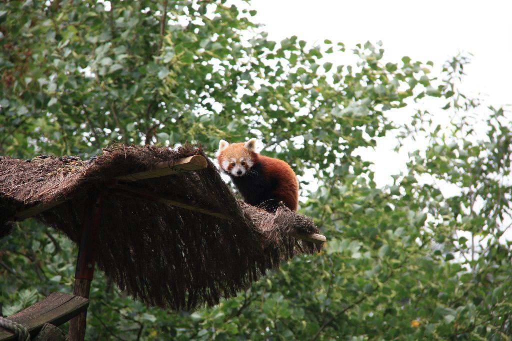 Panda - Schöner Blog(t)