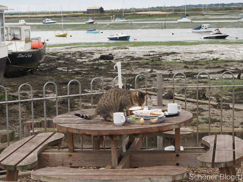 West Mersea Oyster Bar - Schöner Blog(t)