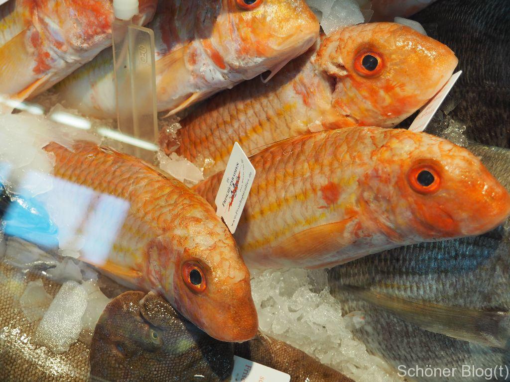 Fischkompetenzkurs